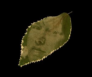 An oval-shaped copperleaf that is green with white jagged edges. Printed in the leaf's chlorophyll, in pale green, is a self-portrait of Megan, who is looking off to the side.